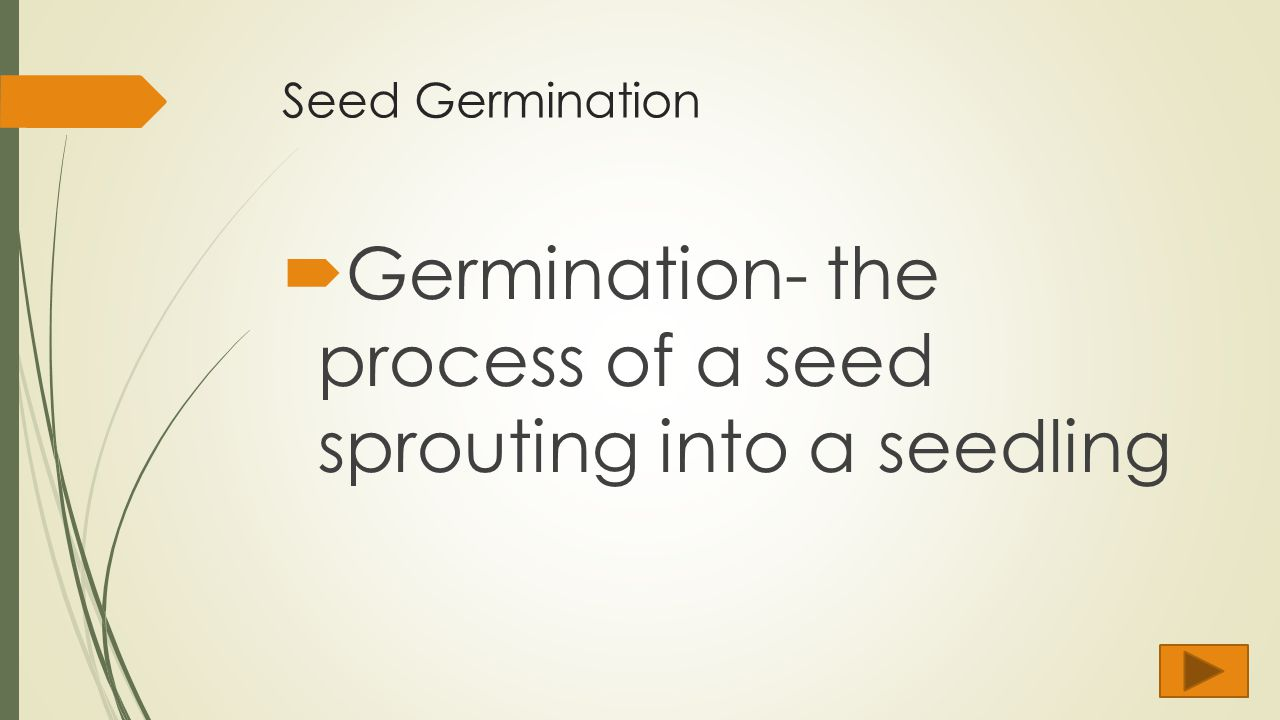 Theme Agronomy Learners Environment Objectives Standards Ppt Sprouting Seed Diagram Germination Images Google Search Might 19