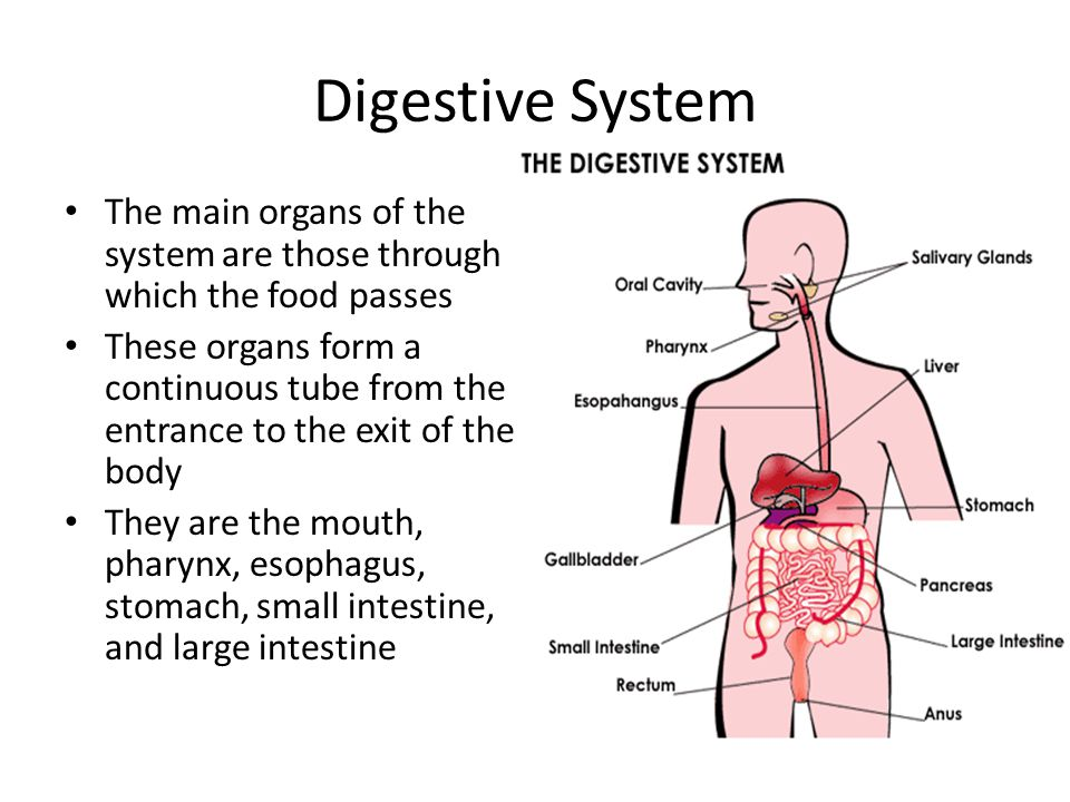 Digestive System Chapter 11 Unit Ppt Download