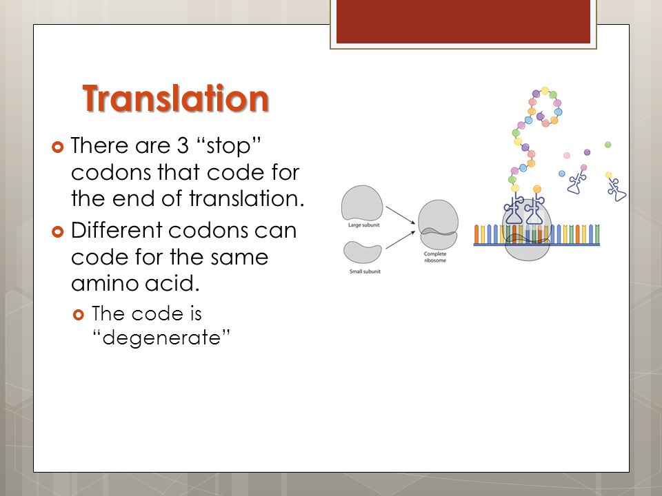 Translation There are 3 stop codons that code for the end of translation. Different codons can code for the same amino acid.