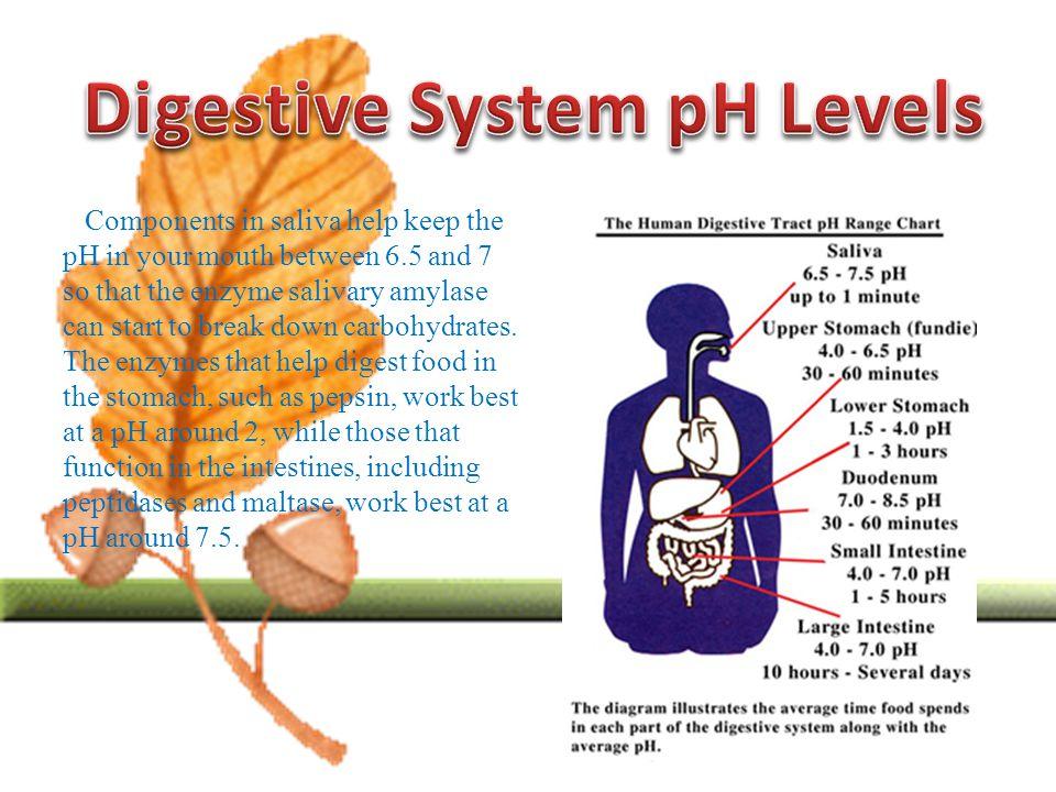 Travel Brochure Of Digestive System Ppt Video Online Download