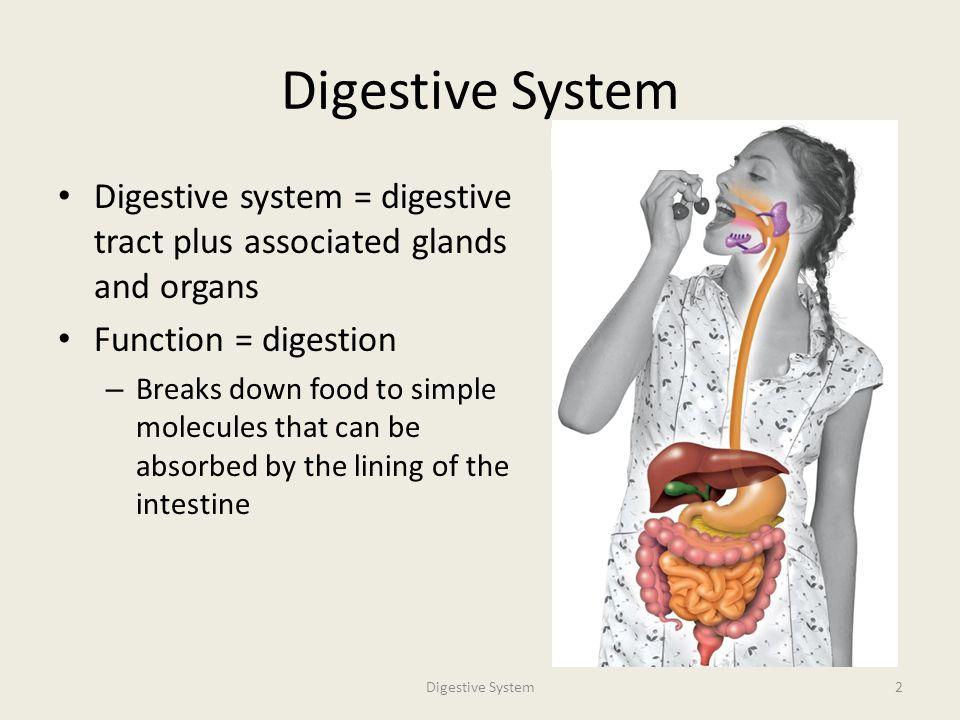 DIGESTIVE SYSTEM Professor Andrea Garrison Biology ppt video online ...
