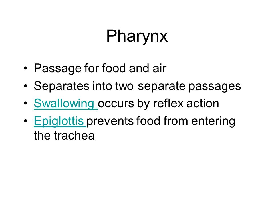 Pharynx Passage for food and air Separates into two separate passages