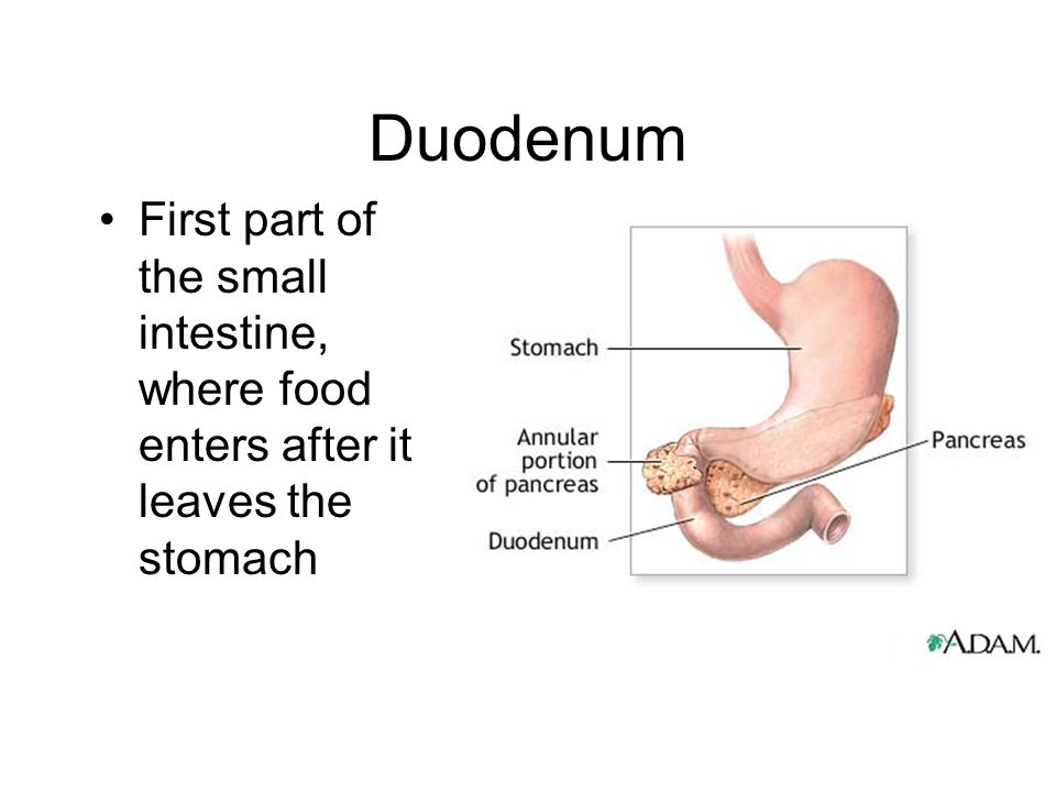 Duodenum First part of the small intestine, where food enters after it leaves the stomach