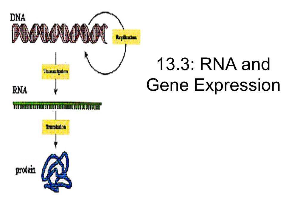 13.3: RNA and Gene Expression