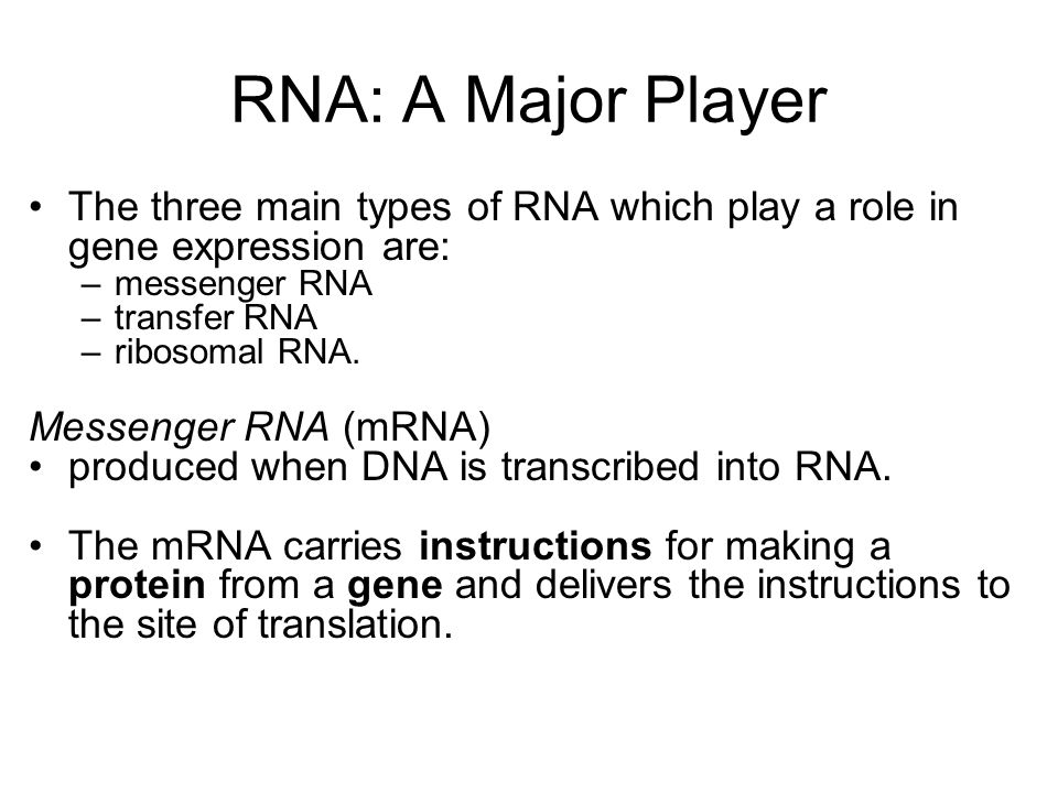 RNA: A Major Player The three main types of RNA which play a role in gene expression are: messenger RNA.