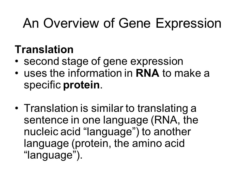 An Overview of Gene Expression
