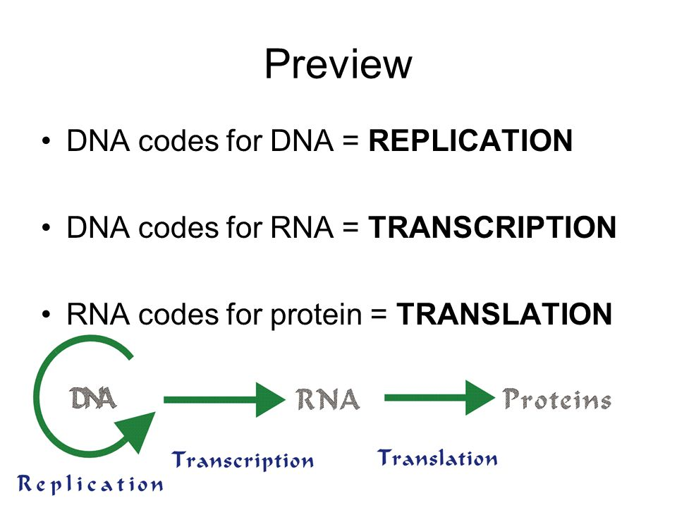 Preview DNA codes for DNA = REPLICATION