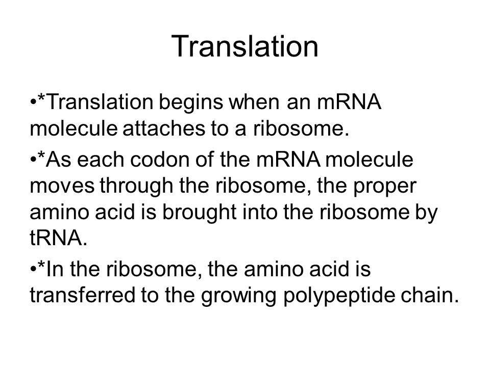 Translation *Translation begins when an mRNA molecule attaches to a ribosome.