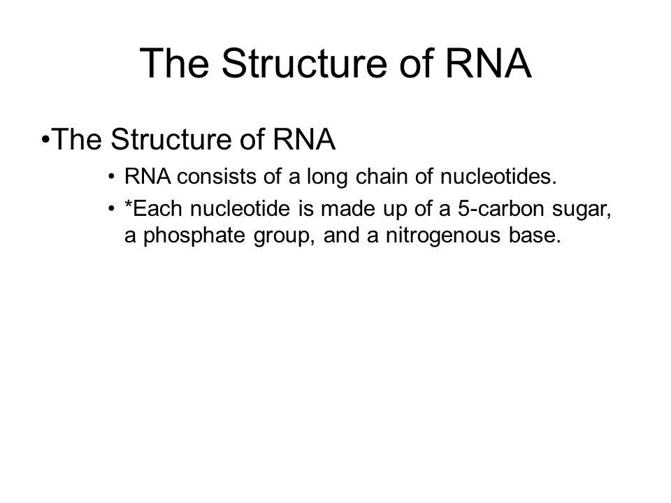 The Structure of RNA The Structure of RNA