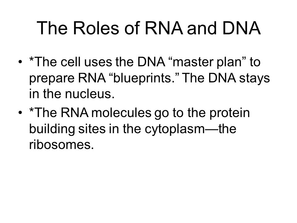 The Roles of RNA and DNA *The cell uses the DNA master plan to prepare RNA blueprints. The DNA stays in the nucleus.