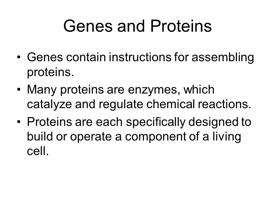 Genes and Proteins Genes contain instructions for assembling proteins.