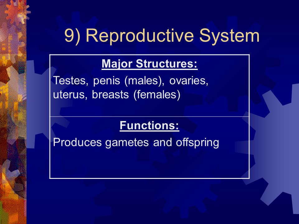 9) Reproductive System Major Structures: