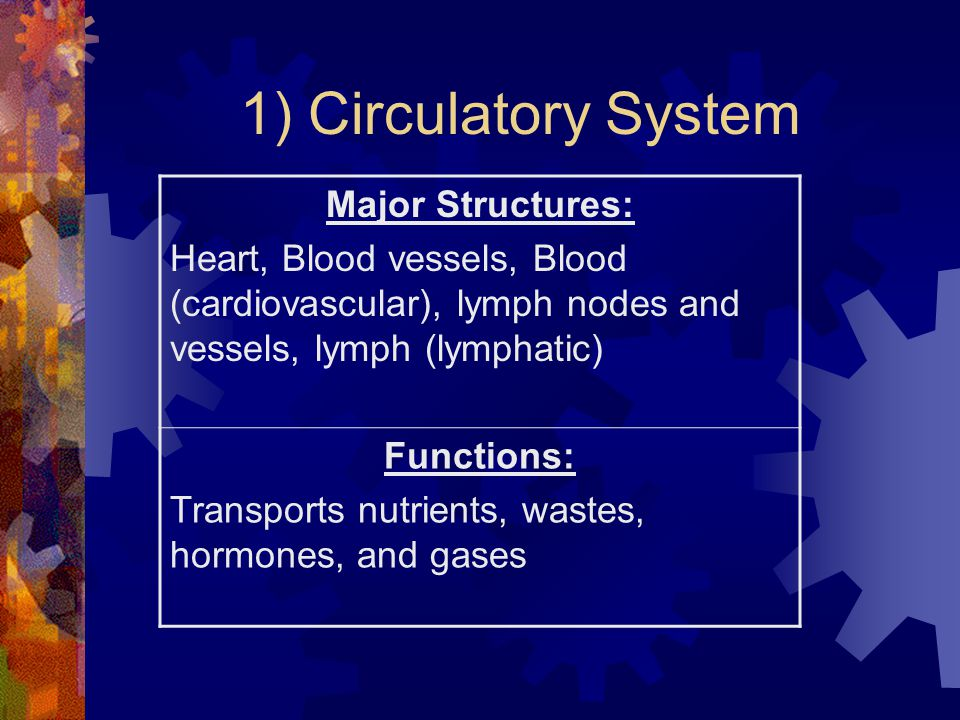 1) Circulatory System Major Structures: