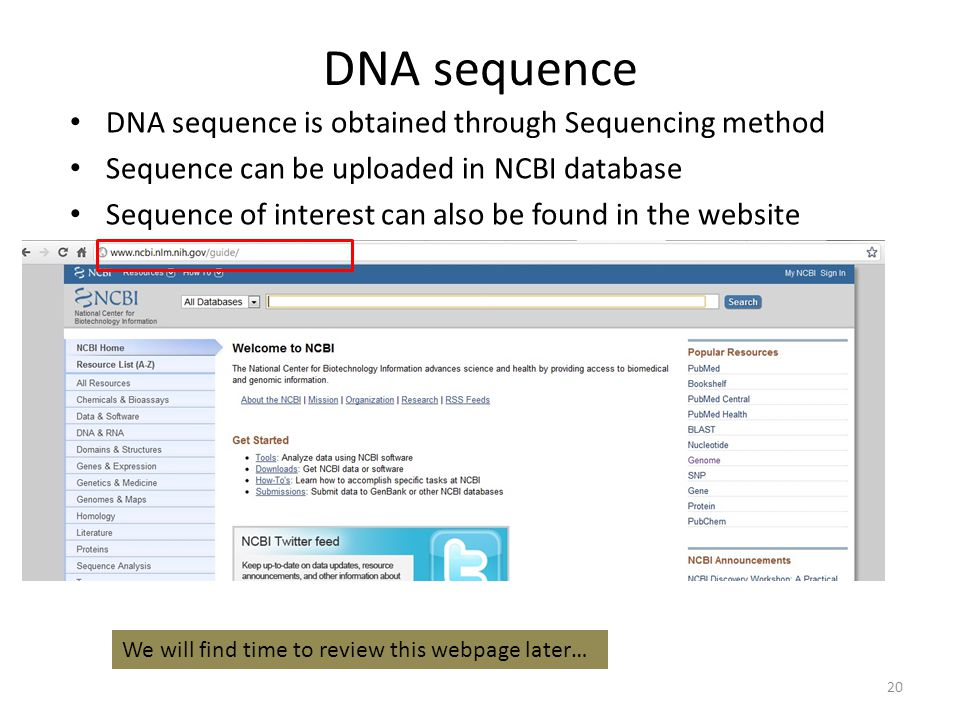 TOPIC 2: BIOMOLECULE 1 DNA & PROTEIN - ppt video online download