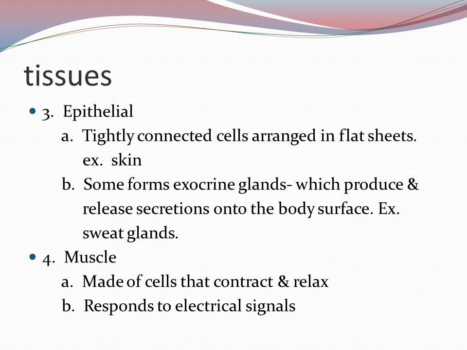 5 Tissues 3