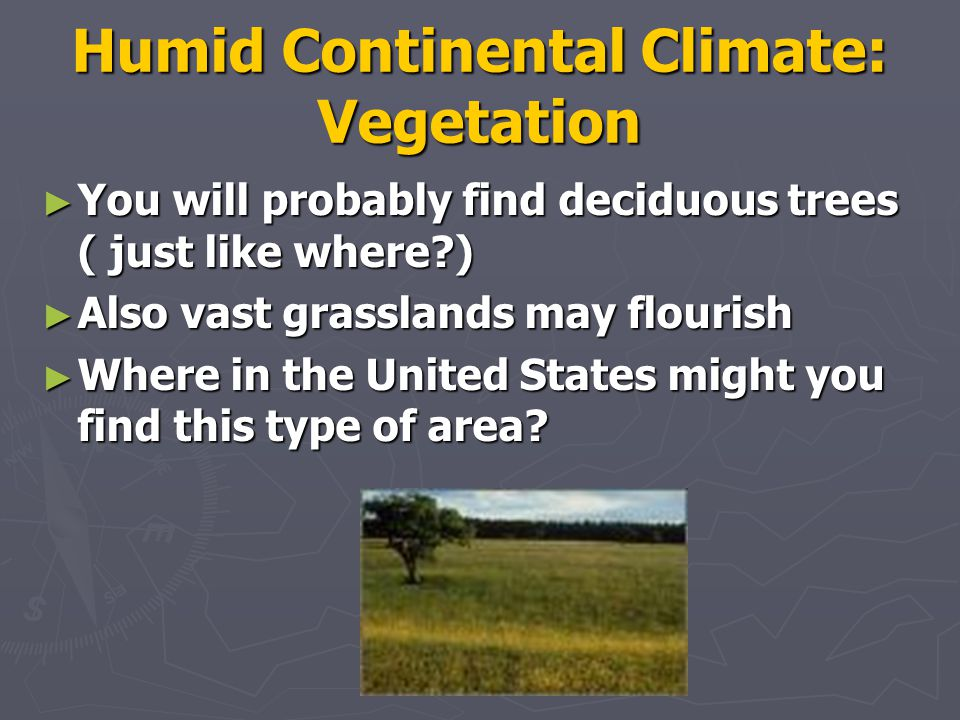 Humid Continental Climate: Vegetation