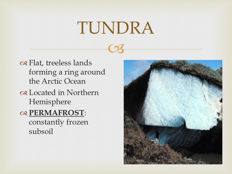 TUNDRA Flat, treeless lands forming a ring around the Arctic Ocean