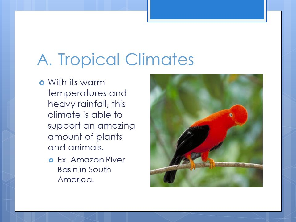 A. Tropical Climates With its warm temperatures and heavy rainfall, this climate is able to support an amazing amount of plants and animals.