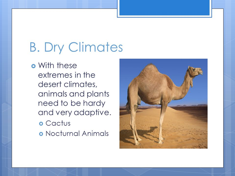 B. Dry Climates With these extremes in the desert climates, animals and plants need to be hardy and very adaptive.