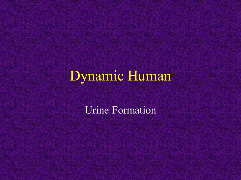 Dynamic Human Urine Formation