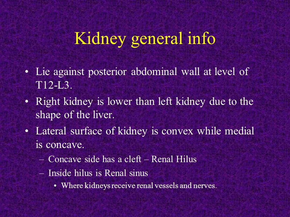 Kidney general info Lie against posterior abdominal wall at level of T12-L3. Right kidney is lower than left kidney due to the shape of the liver.