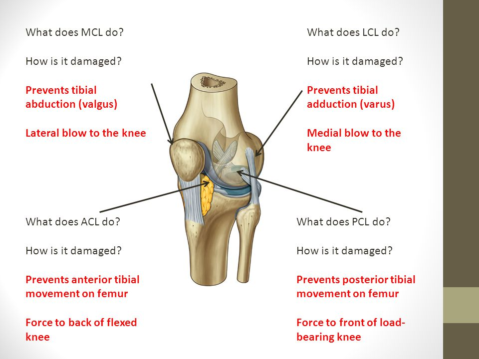 Knee, Leg, Ankle & Foot Anatomy - ppt video online download