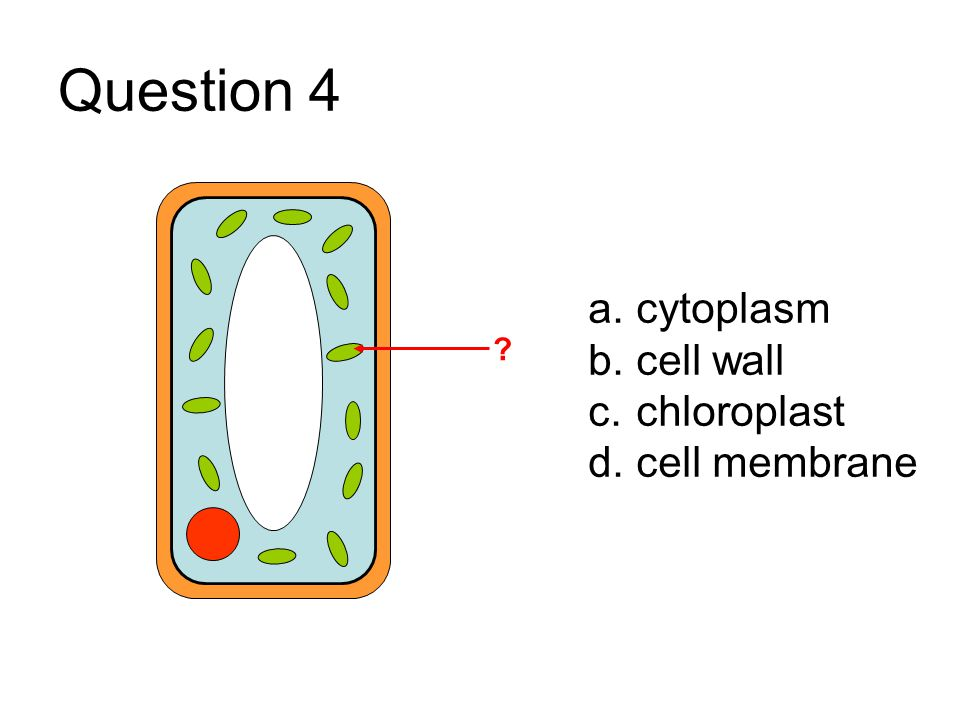 Cell structure and function multiple choice quiz questions and 5 question ccuart Images