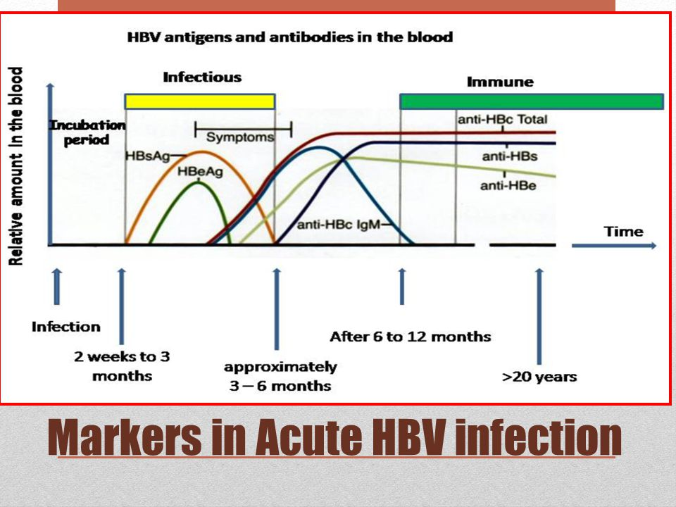 Markers in Acute HBV infection