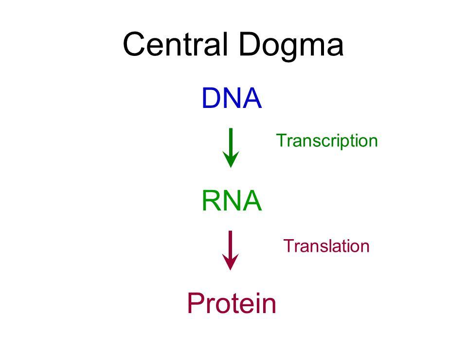 Ppt dna transcription & translation powerpoint presentation id.