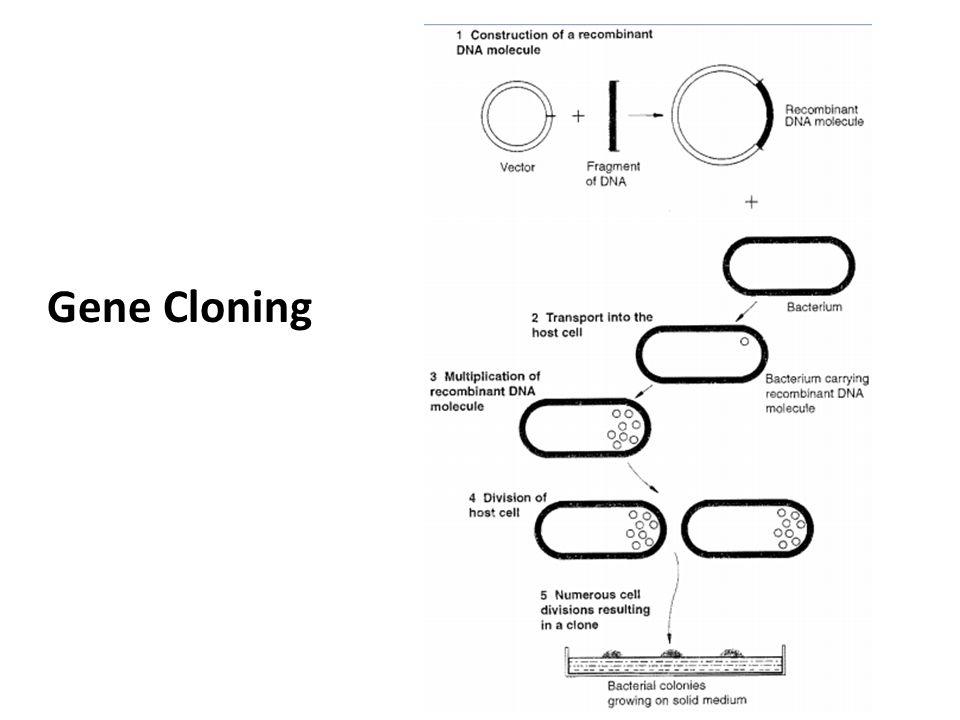 lec 3  recombinant dna technology-part 2
