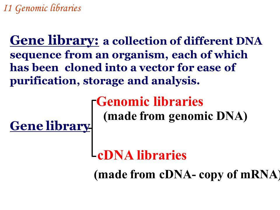 genomic library vs cdna library