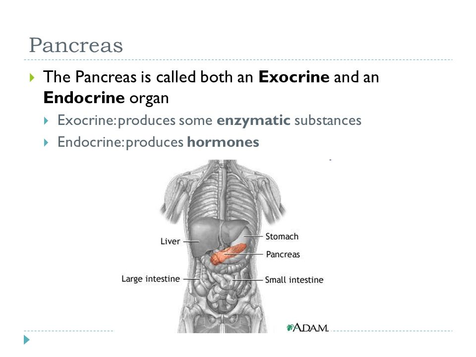 Pancreas The Pancreas is called both an Exocrine and an Endocrine organ. Exocrine: produces some enzymatic substances.