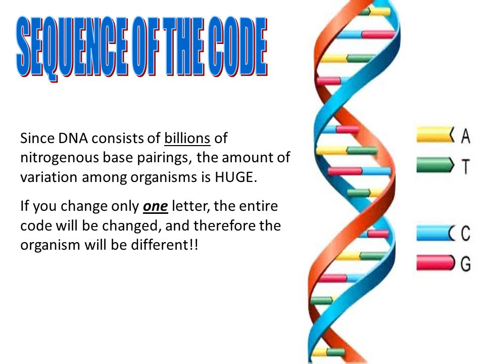 what is the four letter dna alphabet dna s code ppt 24502