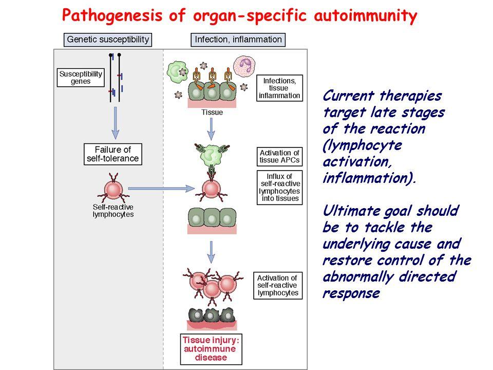 immunological tolerance and autoimmunity pdf
