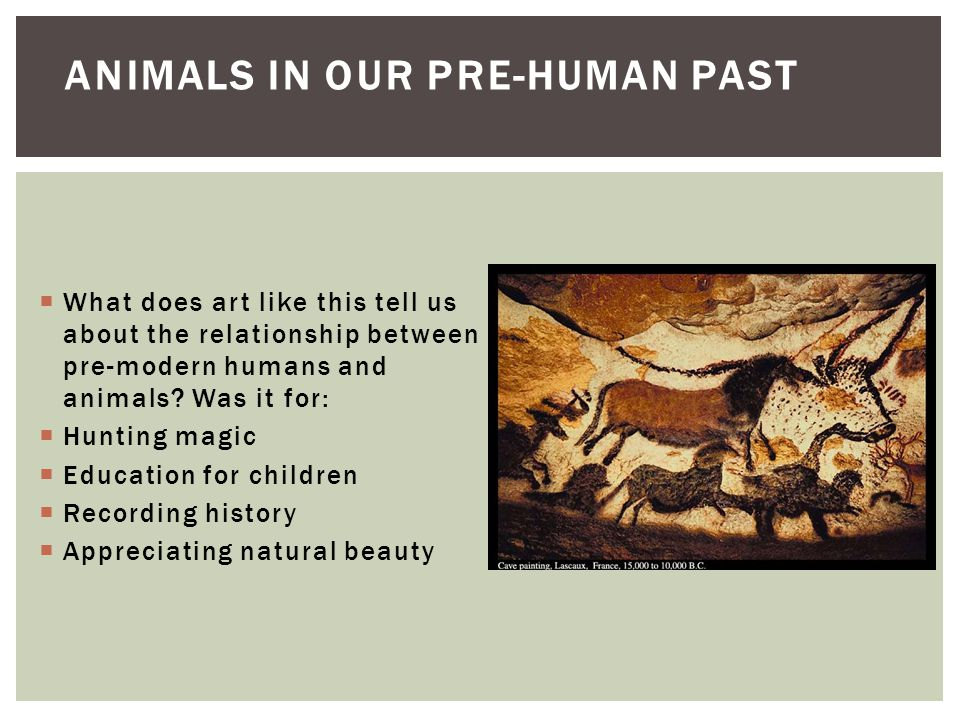 relationship between humans and animals