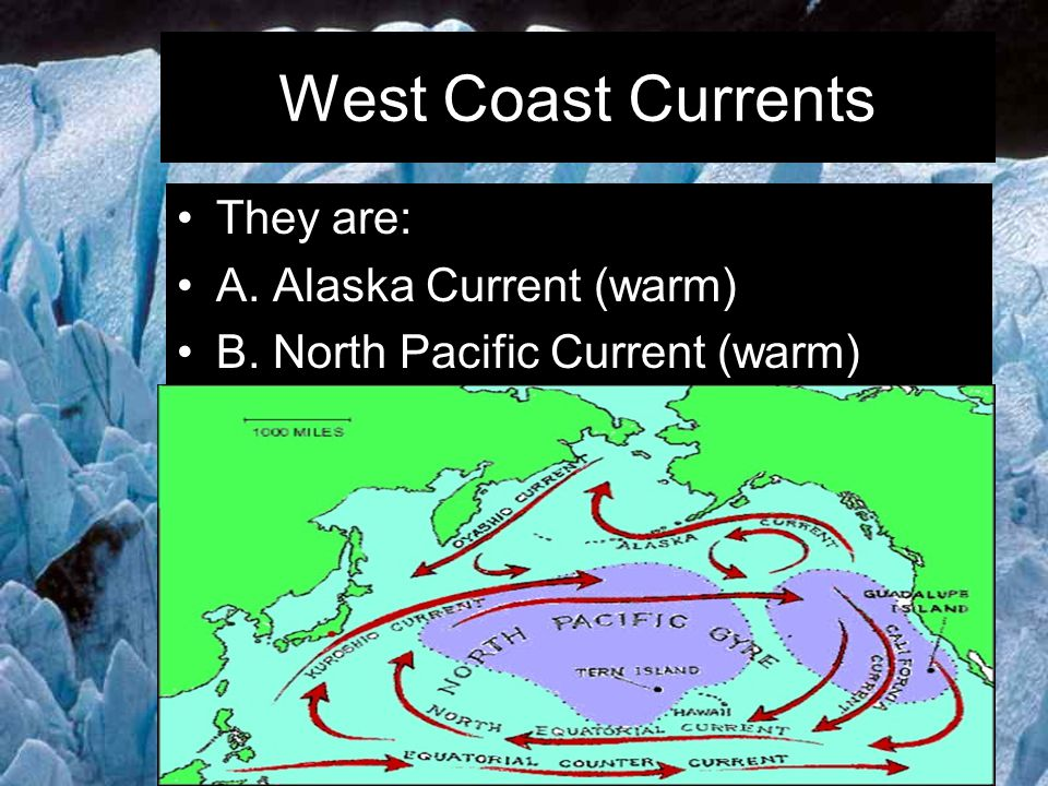West Coast Currents They are: A. Alaska Current (warm)