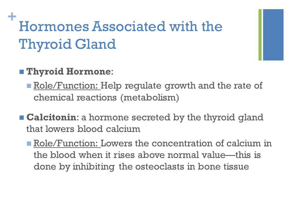 Thyroid Gland And Parathyroid Glands Ppt Video Online Download