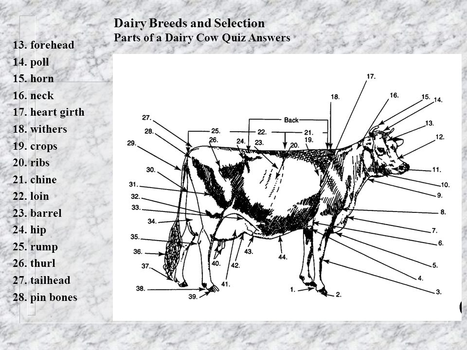 dairy breeds and selection parts of a dairy cow quiz answers