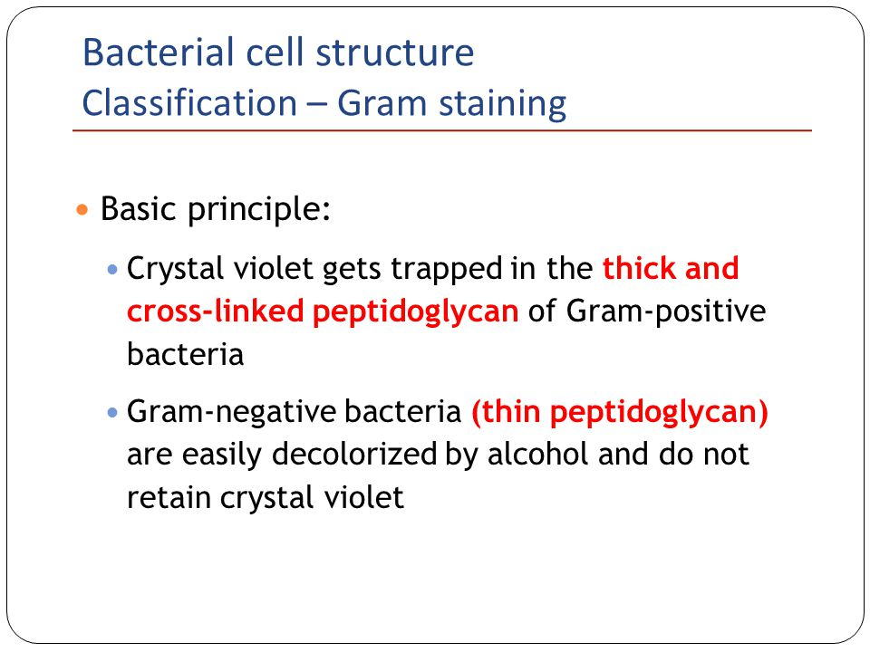 Bacterial cell structure ppt video online download bacterial cell structure classification gram staining ccuart