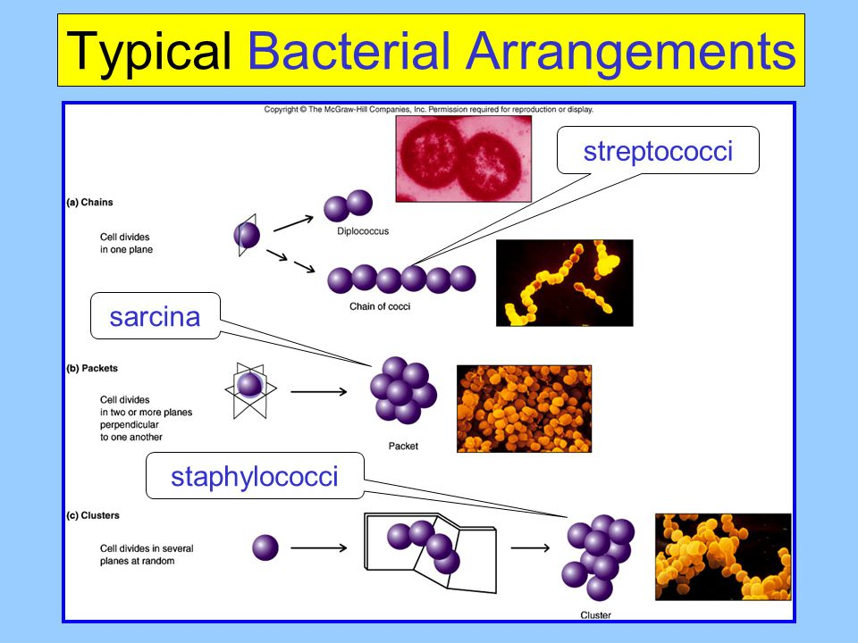 Typical Bacterial Arrangements