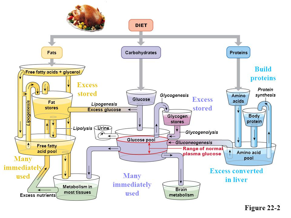 Excess converted in liver Metabolism in most tissues