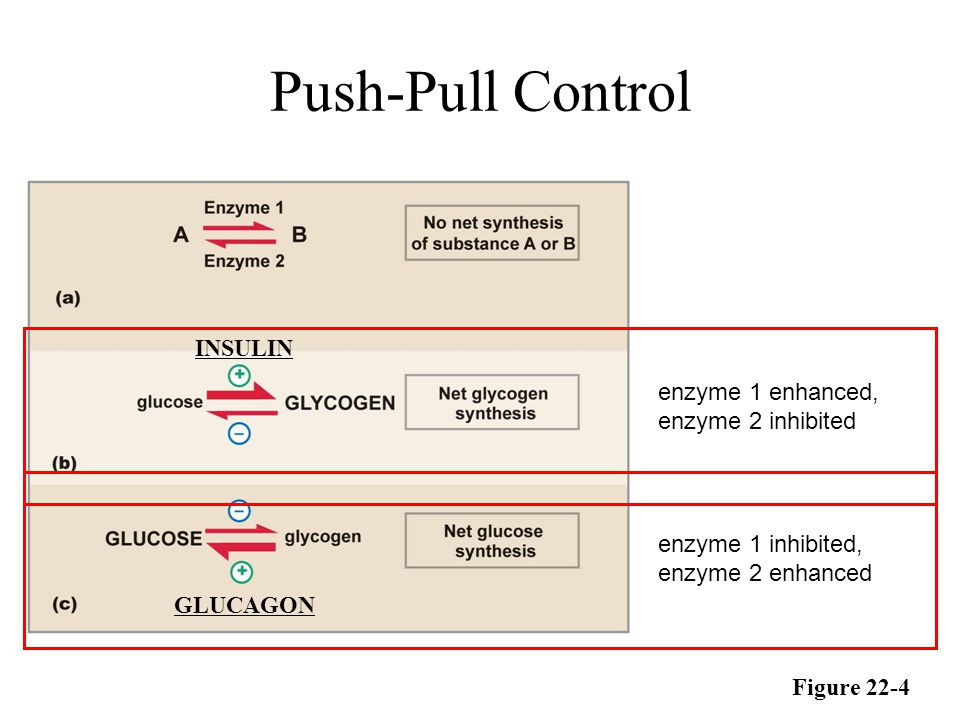 Push-Pull Control INSULIN enzyme 1 enhanced, enzyme 2 inhibited