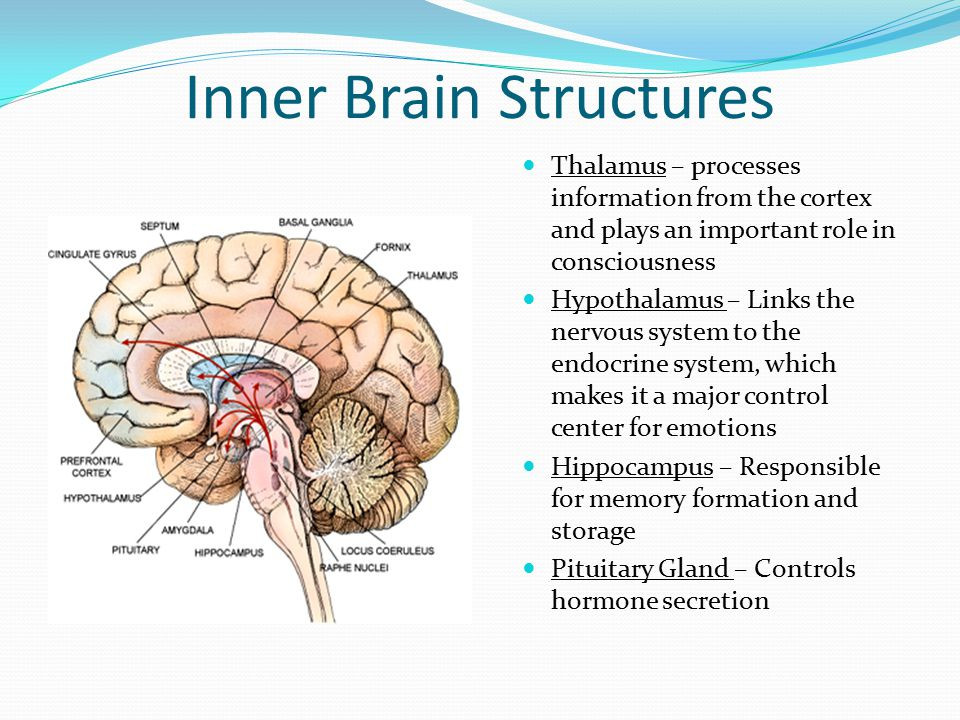 brain tumor information module ppt video online download