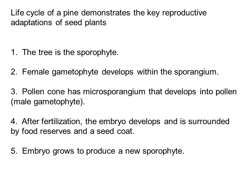 Life cycle of a pine demonstrates the key reproductive adaptations of seed plants