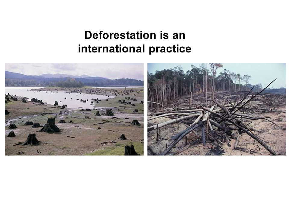 Deforestation is an international practice