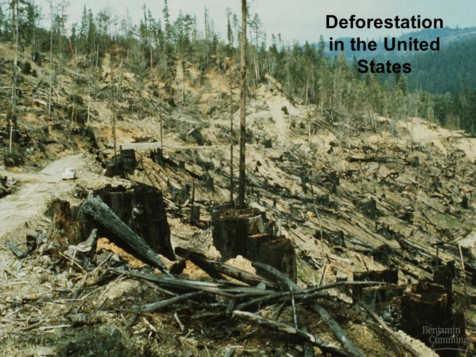 Deforestation in the United States