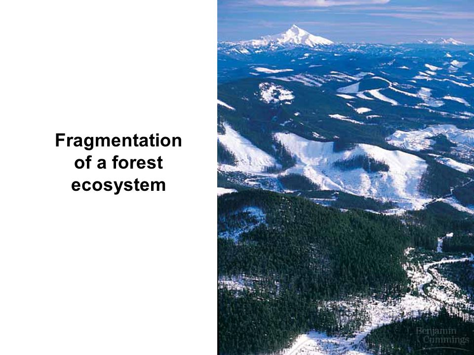 Fragmentation of a forest ecosystem
