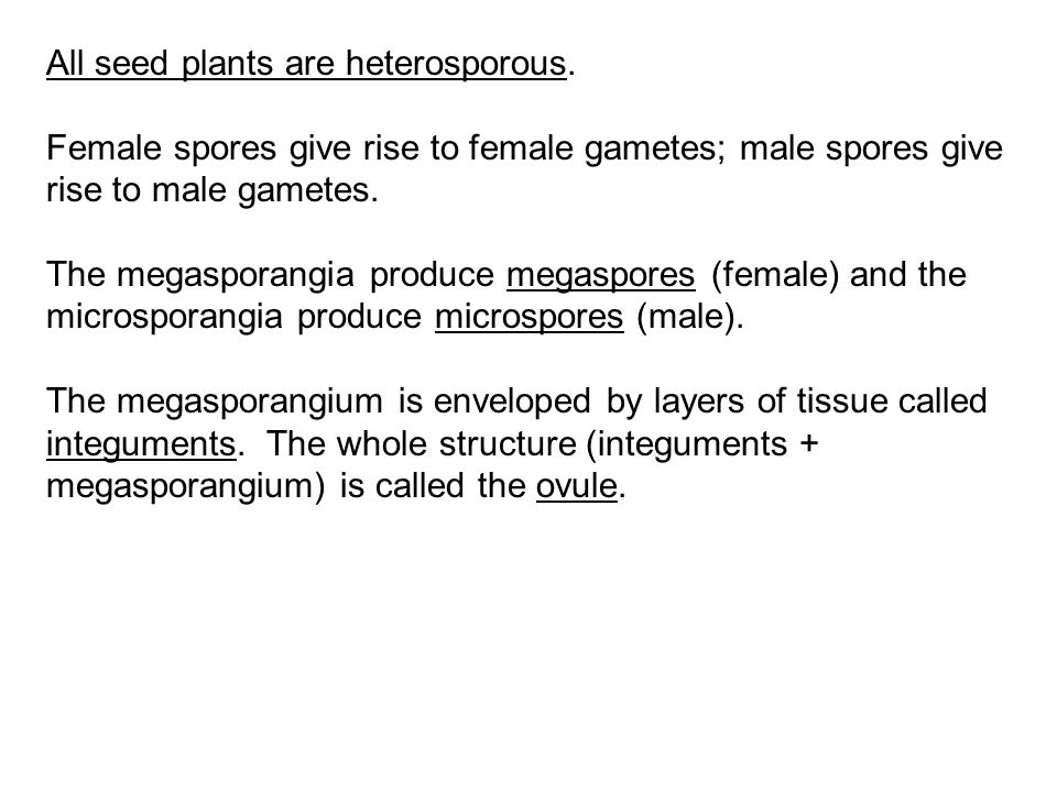 All seed plants are heterosporous.