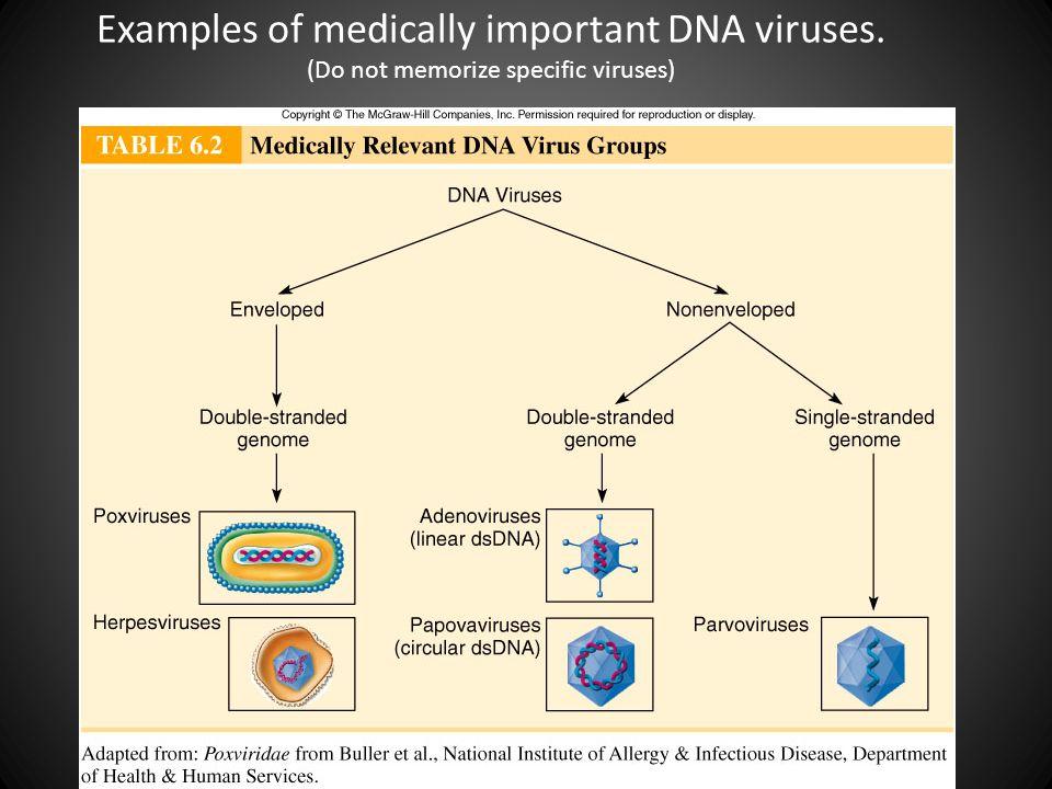 Viruses  - ppt video online download