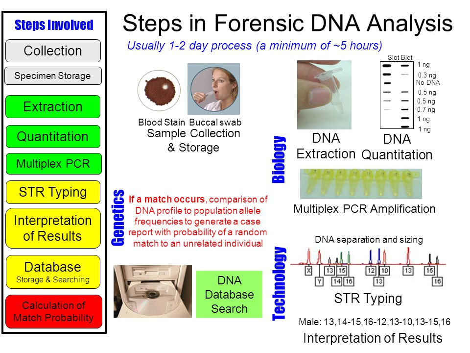 a history of dna typing and analysis criminology essay The forensic use of dna typing is an outgrowth of its medical diagnostic use—analysis of disease-causing genes based on comparison of a patient's dna with that of family members to study inheritance patterns of genes or with reference standards to detect mutations.